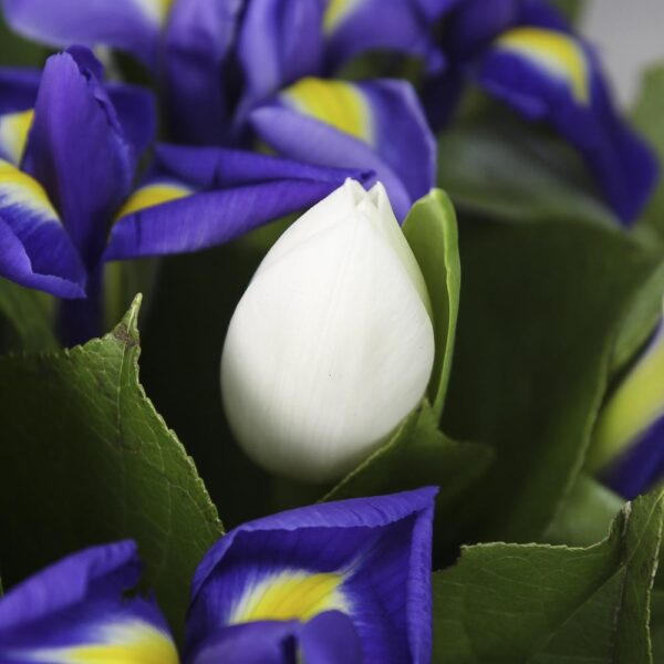 Коробка с цветами «Синие ирисы и белые тюльпаны»